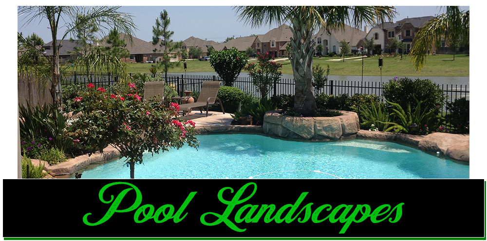 pool landscaping, pool landscapes, pool scaping